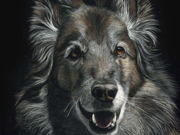 """12""""x9"""" Portrait of a Belgian Tervuren.  This is a drawing, NOT A PHOTO!"""