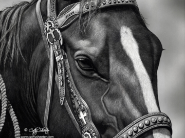 """11""""x14"""" Scratchboard Portrait of a Quarter Horse.  This is a drawing, NOT A PHOTO."""