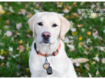 Dog Photography by Erica Aitken