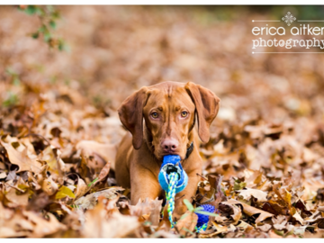 Camouflage Playful Pup Photo by Erica Aitken