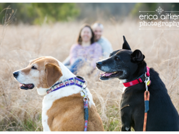 Dogs Before People, a Photo by Erica Aitken