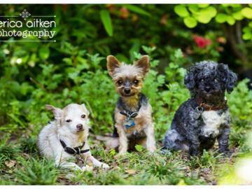 Trio of Dogs, a Photo by Atlanta Photographer Erica Aitken