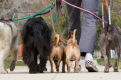Request Quote: AnimalLovers Petsitting - Los Angeles, CA