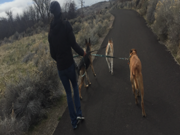 Walkies in Reno!