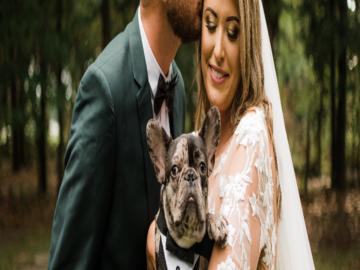 Frenchie in wedding