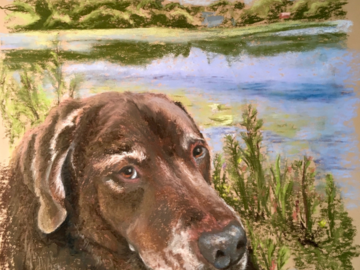 Chocolate Lab in pastel