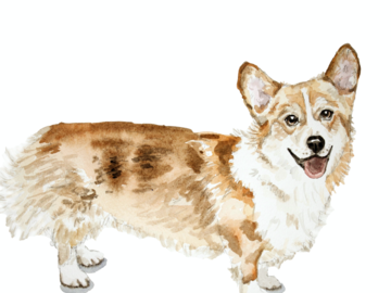 Corgi Watercolor Pet Portrait