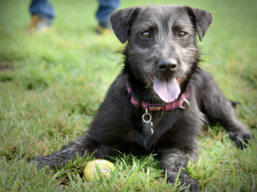 Outdoor Portrait of a Terrier Mix