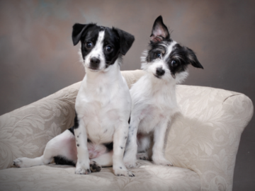 Studio Session of Two Puppies