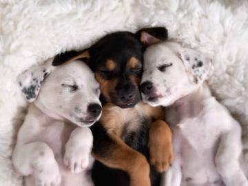 Snuggle Studio Portrait of Puppies