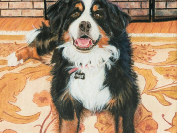 Colored Pencil painting of Bernese Mountain Dog