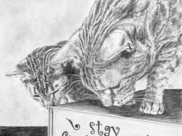 Graphite drawing of two curious ocicats