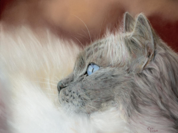 Pastel painting of a ragdoll cat
