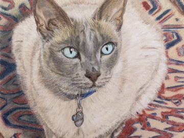 Colored pencil painting of a Tonkinese cat