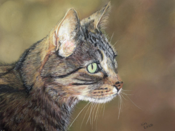 Pastel painting of a tabby cat