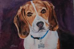 Request Quote: Polished Pet Portraits by Linda- Phoenix, AZ