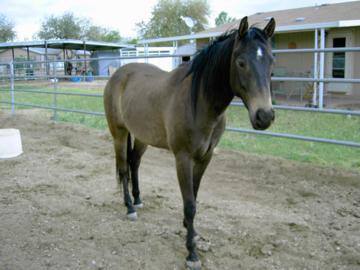 Firebolt-horse client