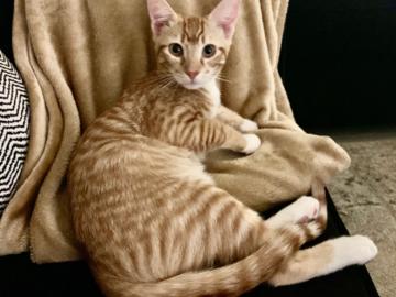 Pickles-cat client
