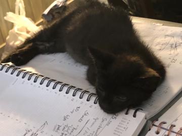 Kitten hard at work