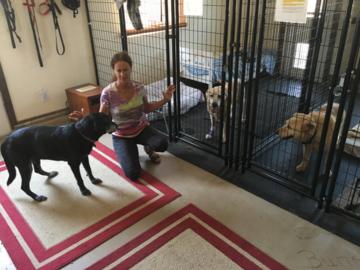 Rescue pups enjoying a Reiki Animal Healing session