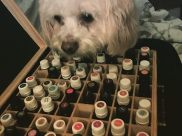 Rescue dog choosing her oils for her session