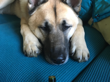 Pup using aromatherapy oils to help relax