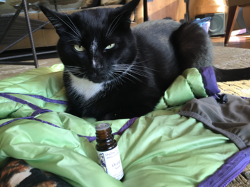 Was the cat enjoying his healing session