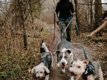 Lori hiking with dogs