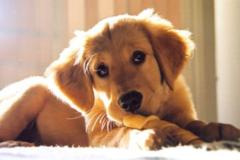 Request Quote: PEGGY TALKS TO ANIMALS! - Ypsilanti, MI - Ann Arbor, MI