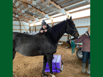 Motion Assessment of horses withers