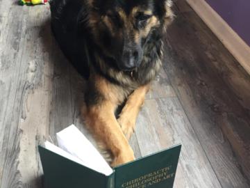 My dog reading :)