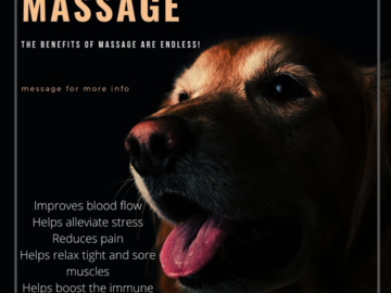 Canine Massage Services