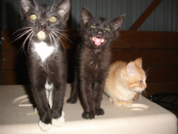 Kittens Talking