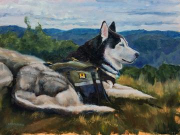 Pet Portrait of Apollo in natural setting