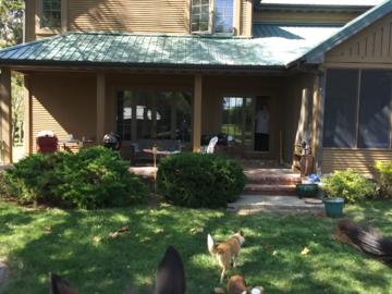 My knuckleheads and backyard
