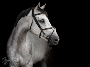 Black Background Horse Portait