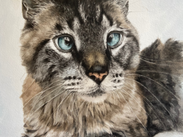 Pooka 10x12 watercolor