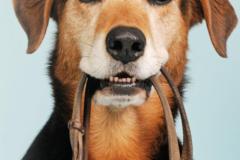 Request Quote: Walks of Nature Dog Walking and Pet Sitting - Northwest CT - Avon, CT