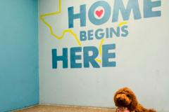 Request Quote: AMPS Pet Service  - Austin, TX