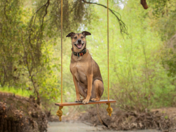 Rescue dog on swing