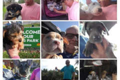 Request Quote: Barry's Pet Care - Cape Coral, FL