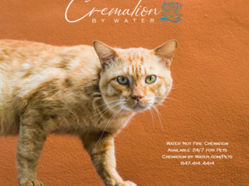 Pets Cremation by Water