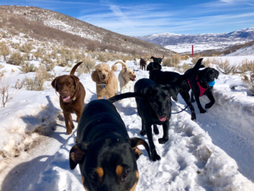 Our Pack Hikes