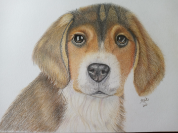 Mr. Beasley, A Beagle