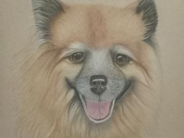 Mitzi, A Pomeranian