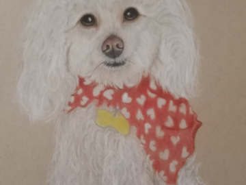 Max is a poodle. This was a memorial piece.