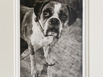 Handmade Dog Portrait Etching of Boxer Dog