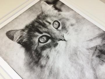Custom Cat Portrait Detail