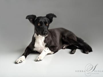 Simple dog portrait