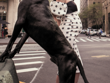 Great Dane with an expecting mom.